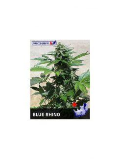 Positronics Blue Rhino Fem (3 Semillas)