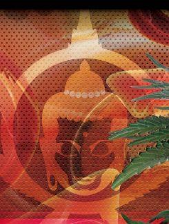 Syrup Auto (3 Semillas) Buddha Seeds
