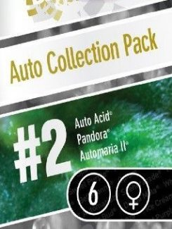 Paradise Seeds Collection Pack2 Auto (6 Semillas)