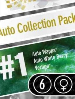 Paradise Seeds Collection Pack1 Auto (6 Semillas)