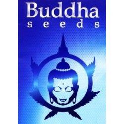 Kraken Fem (3 Semillas) Buddha Seeds