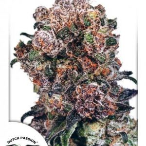 Dutch Passion Blueberry Reg (10 Semillas)