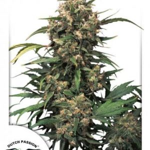 Dutch Passion Strawberry Cough Fem (10 Semillas)