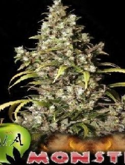 Eva Seeds Monster Fem (3 Semillas)