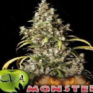 Eva Seeds Monster Fem (6 Semillas)