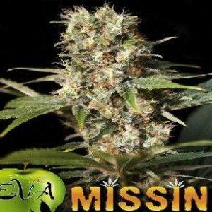 Eva Seeds Missing Fem (3 Semillas)