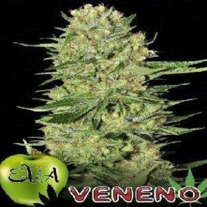 Eva Seeds Veneno Fem (6 Semillas)