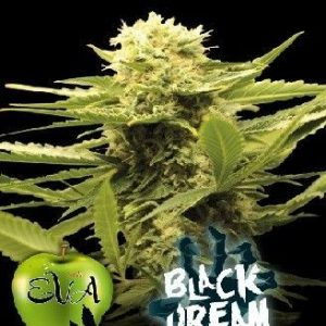 Eva Seeds Black Dream Fem (3 Semillas)
