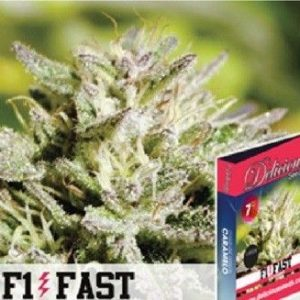 Delicious Seeds Caramelo F1 Fast Fem (3 Semillas)
