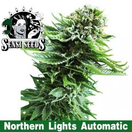Northern Lights Automatic(1 semillas) Sensi Seeds Automaticas