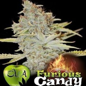 Eva Seeds Furious Candy Fem (3 Semillas)