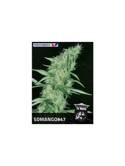 Positronics Somango 47 Fem (5 Semillas)
