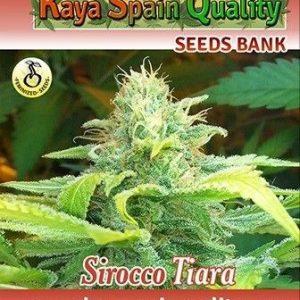 Kaya Spain Quality Sirocco Tiara Fem (3 Semillas)