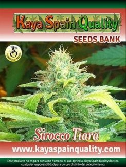 Kaya Spain Quality Sirocco Tiara Fem (5 Semillas)