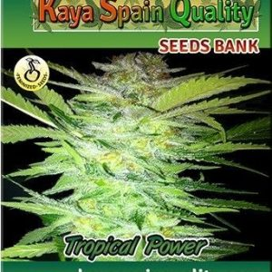 Kaya Spain Quality Tropical Power Fem (3 Semillas)