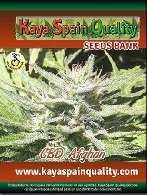 Kaya Spain Quality CBD Afghan Fem (5 Semillas)