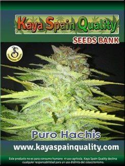 Kaya Spain Quality Puro Hachis Fem (3 Semillas)