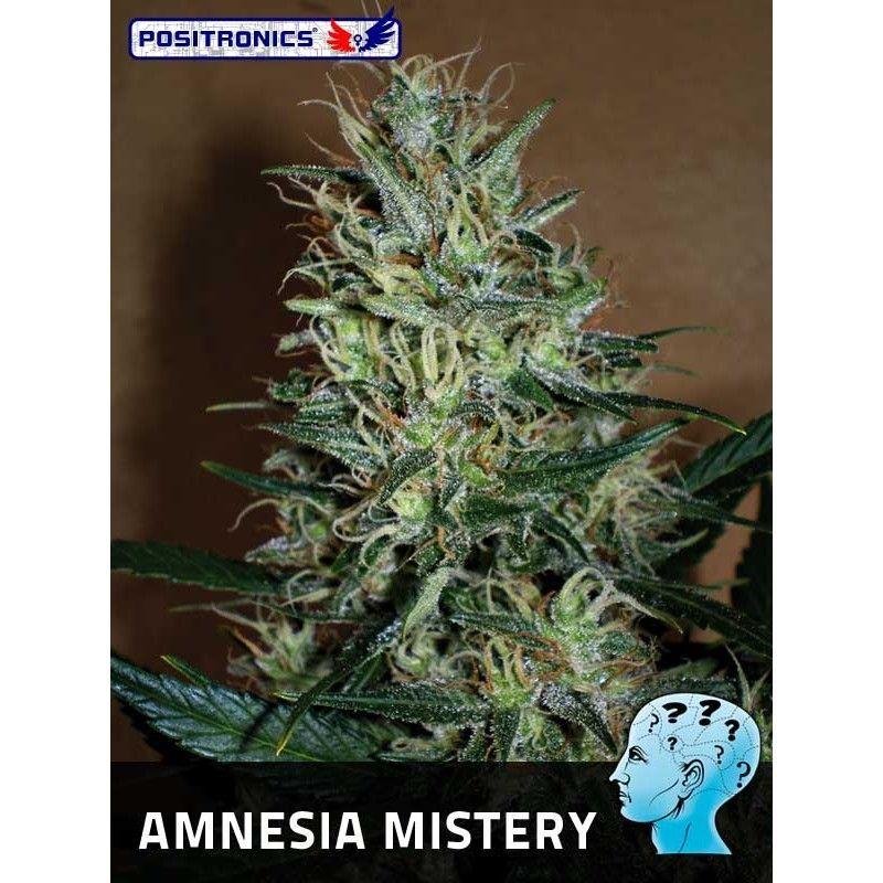 Positronics Amnesia Mistery Fem (3 Semillas)